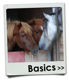Equine Behaviour and Training Association, improving equine